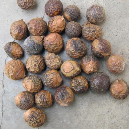 Reetha or soapnuts